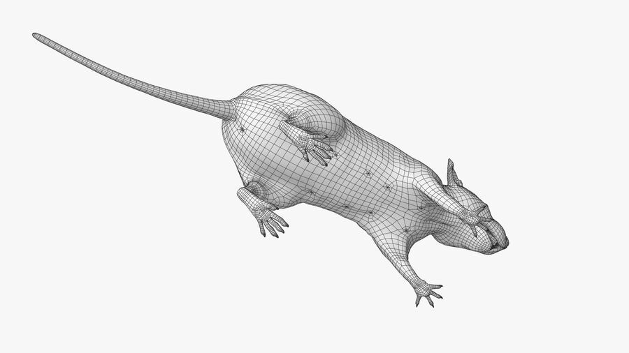 Rat sans poils royalty-free 3d model - Preview no. 23