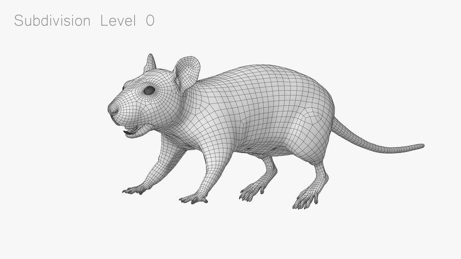 Rat sans poils royalty-free 3d model - Preview no. 19