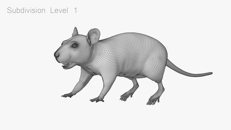 Rat sans poils royalty-free 3d model - Preview no. 20