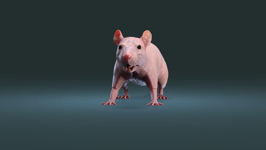 Rat sans poils royalty-free 3d model - Preview no. 11