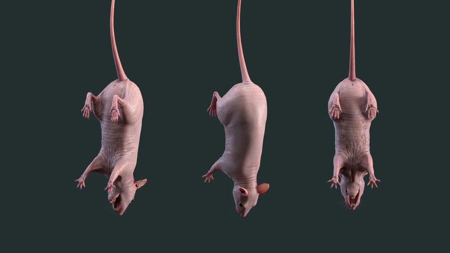Rat sans poils royalty-free 3d model - Preview no. 9