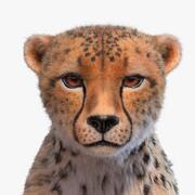 Gepard mit Pelz Xgen 3d model