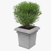 Planteur 3d model