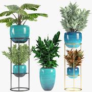 Kolekcje Rośliny 07 3d model