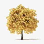 6 Metre Sonbahar Norveç Akça Ağaç 3d model