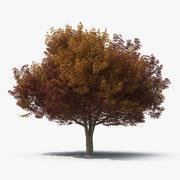 White Ash Tree Autumn 3d model