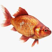 リアルな金の魚 3d model