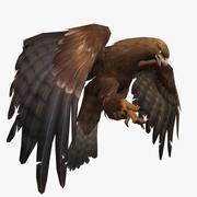 Eagle Animated 3d model