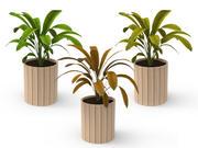 Plantas de interior modelo 3d