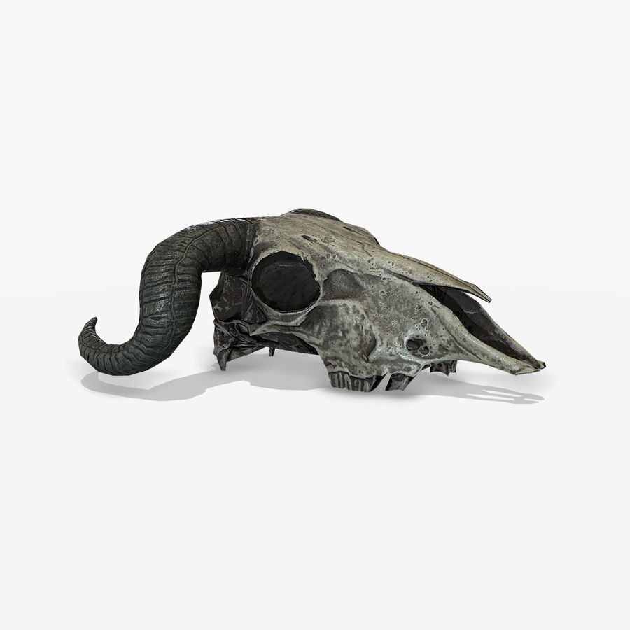 Animal Skull royalty-free 3d model - Preview no. 3