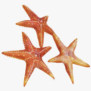 Estrela do Mar 3d model
