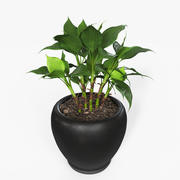 Plant Aglaonema Modestum 3d model