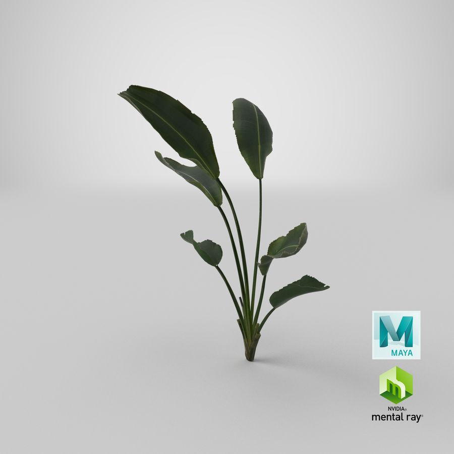 植物鹤望兰 royalty-free 3d model - Preview no. 33