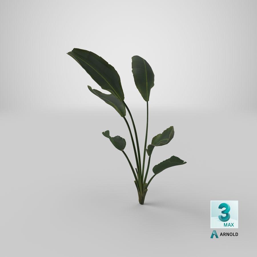 植物鹤望兰 royalty-free 3d model - Preview no. 29