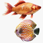 Gold Fish and Discus Fish 3d model