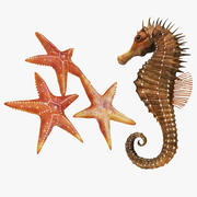 Sea Horse and Star Fish 3d model