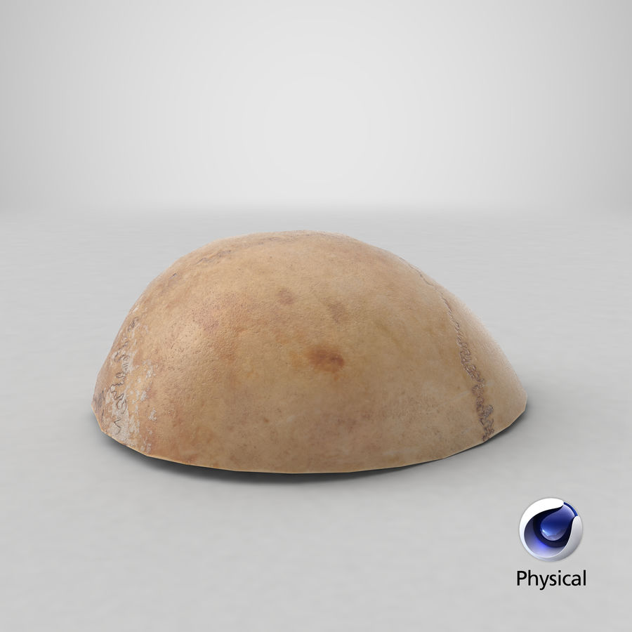 Human Skull  Cranial  02 Piece royalty-free 3d model - Preview no. 22