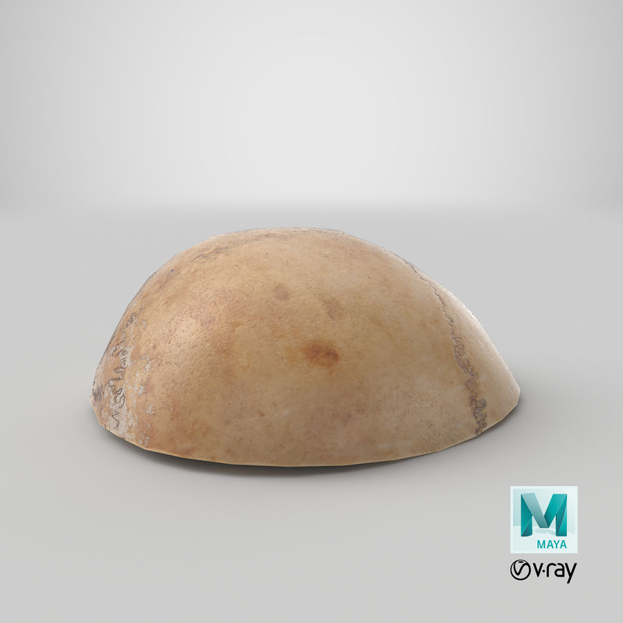 Human Skull  Cranial  02 Piece royalty-free 3d model - Preview no. 29