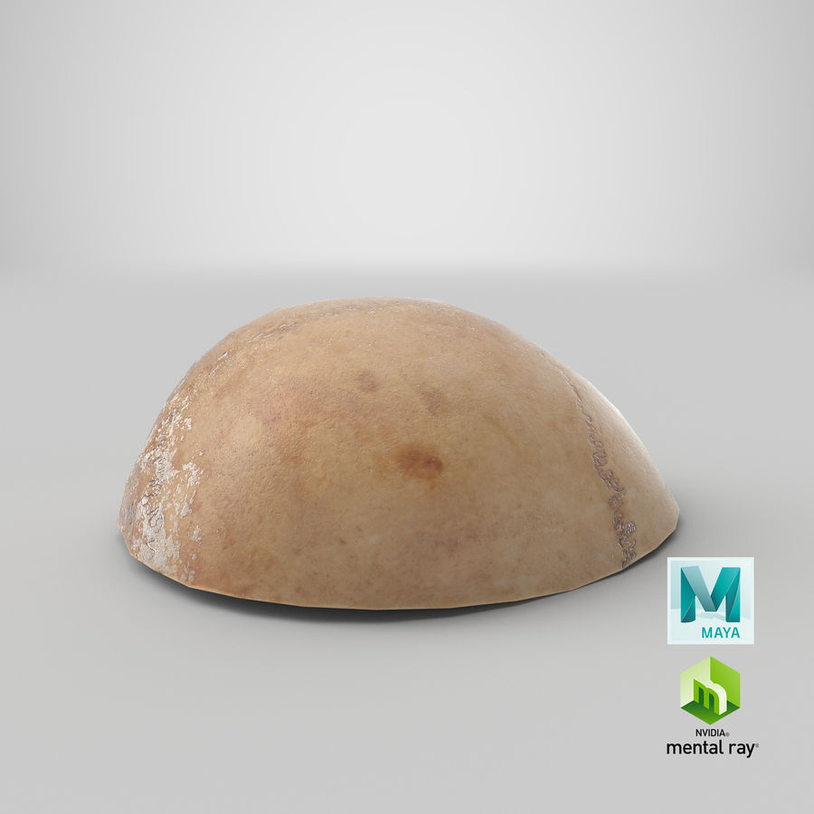 Human Skull  Cranial  02 Piece royalty-free 3d model - Preview no. 28