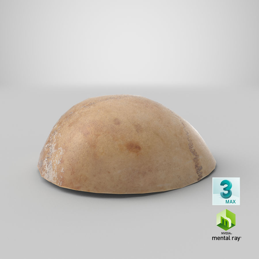 Human Skull  Cranial  02 Piece royalty-free 3d model - Preview no. 25