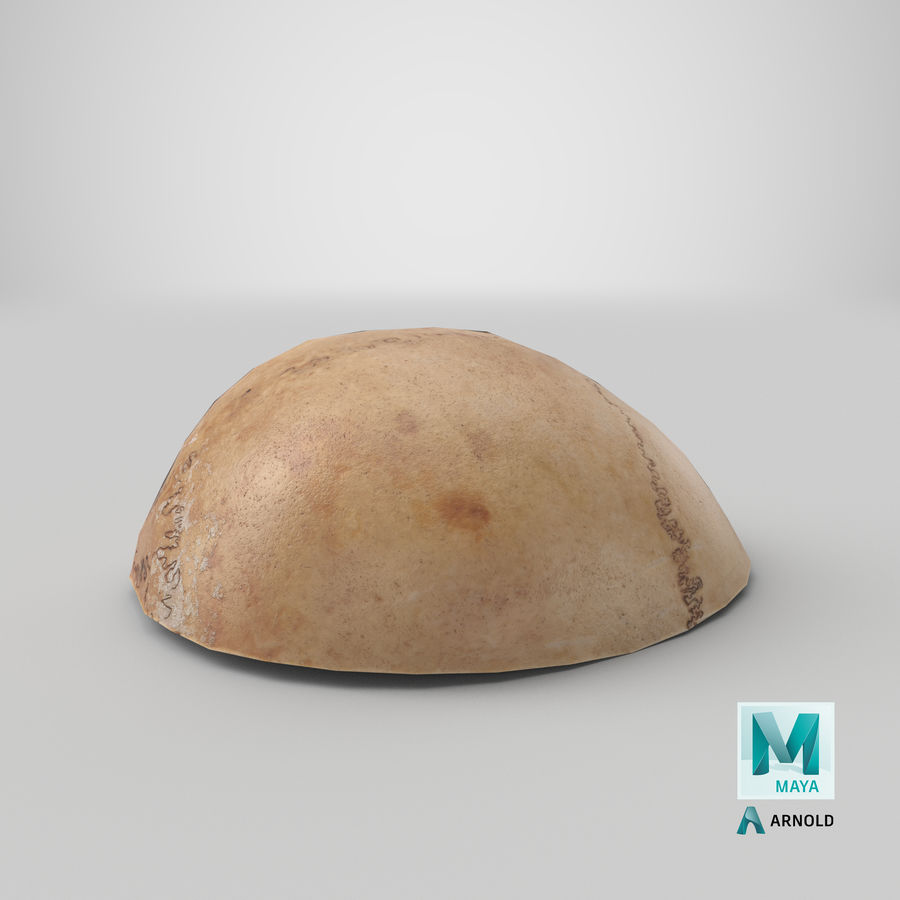 Human Skull  Cranial  02 Piece royalty-free 3d model - Preview no. 27