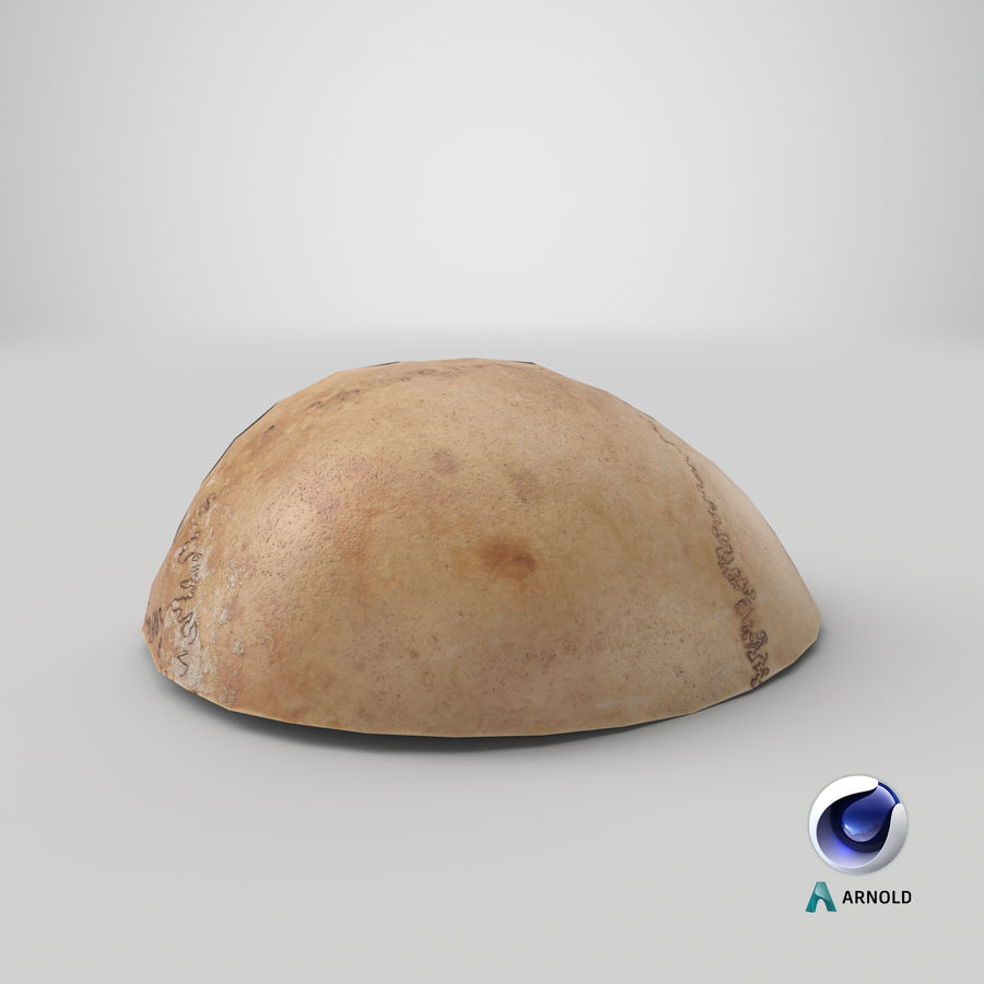 Human Skull  Cranial  02 Piece royalty-free 3d model - Preview no. 23