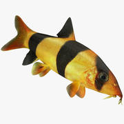 Clown Loach Fish Rigged Animated 3d model
