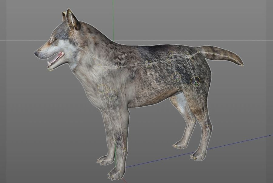 Wolf Rigged royalty-free 3d model - Preview no. 15