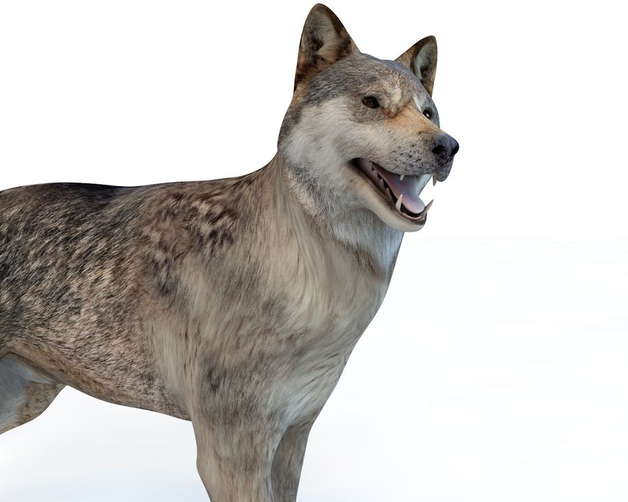 Wolf Rigged royalty-free 3d model - Preview no. 2
