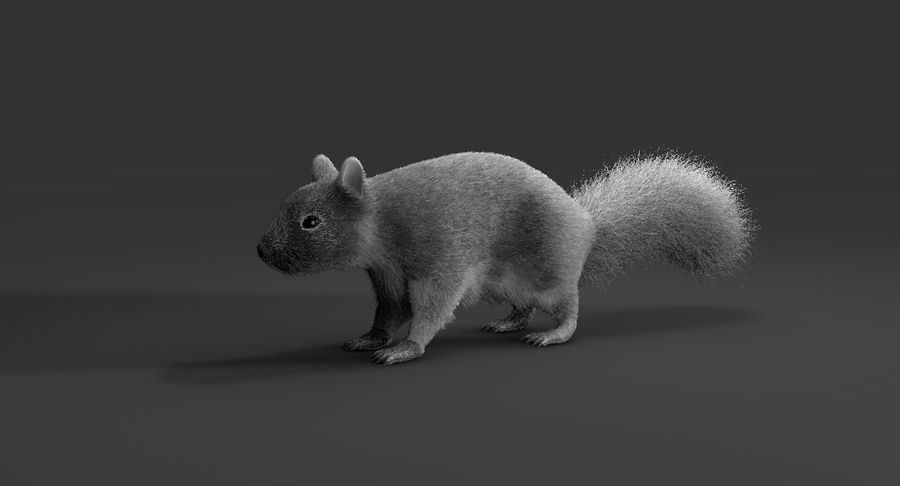 White Squirrel (FUR) royalty-free 3d model - Preview no. 7