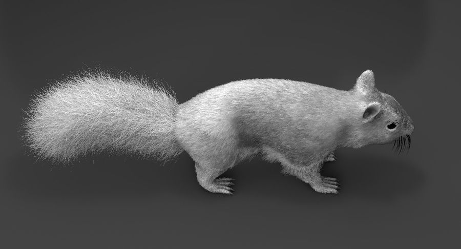 White Squirrel (FUR) royalty-free 3d model - Preview no. 4