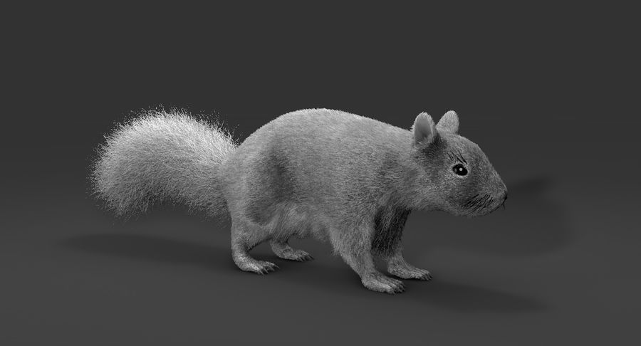 White Squirrel (FUR) royalty-free 3d model - Preview no. 2