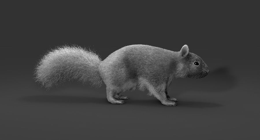 White Squirrel (FUR) royalty-free 3d model - Preview no. 3