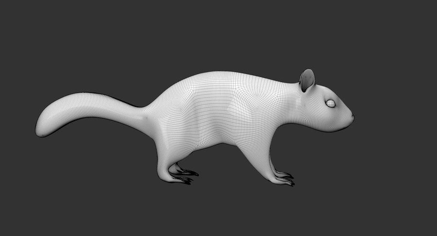 White Squirrel (FUR) royalty-free 3d model - Preview no. 10