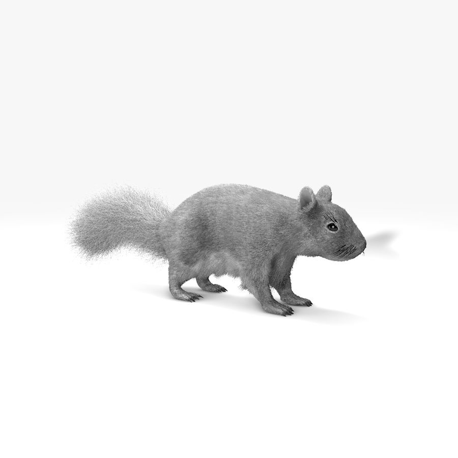 White Squirrel (FUR) royalty-free 3d model - Preview no. 1
