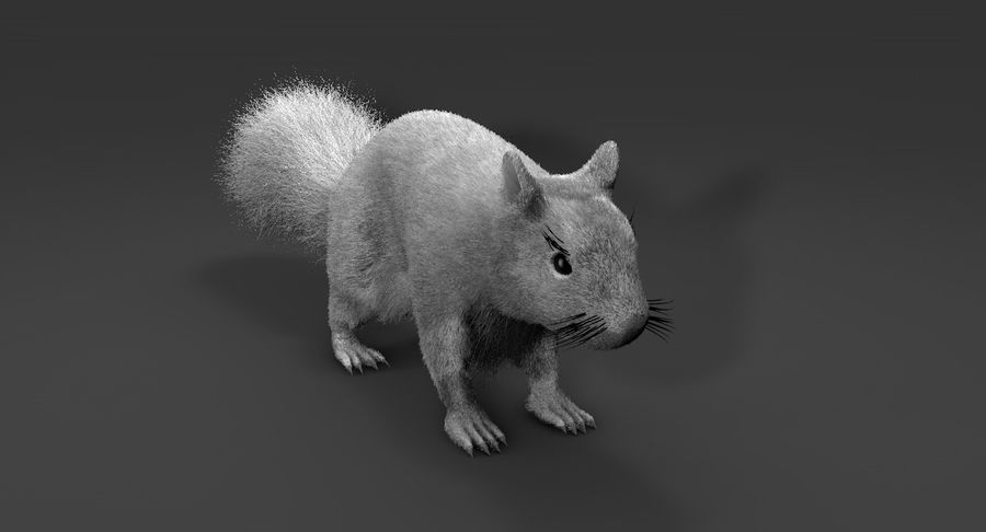 White Squirrel (FUR) royalty-free 3d model - Preview no. 5