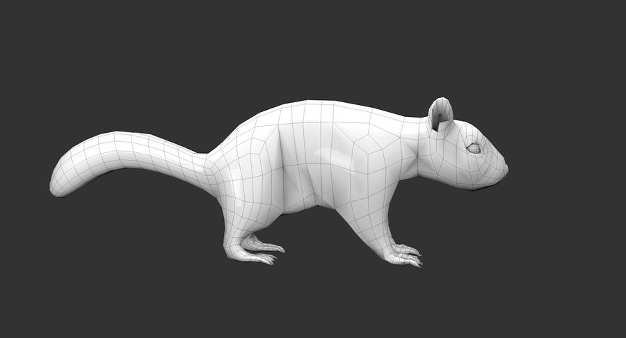 White Squirrel (FUR) royalty-free 3d model - Preview no. 9