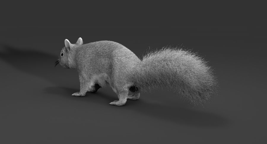 White Squirrel (FUR) royalty-free 3d model - Preview no. 6