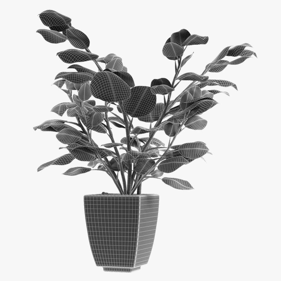 Kolekcje Rośliny 08 royalty-free 3d model - Preview no. 7