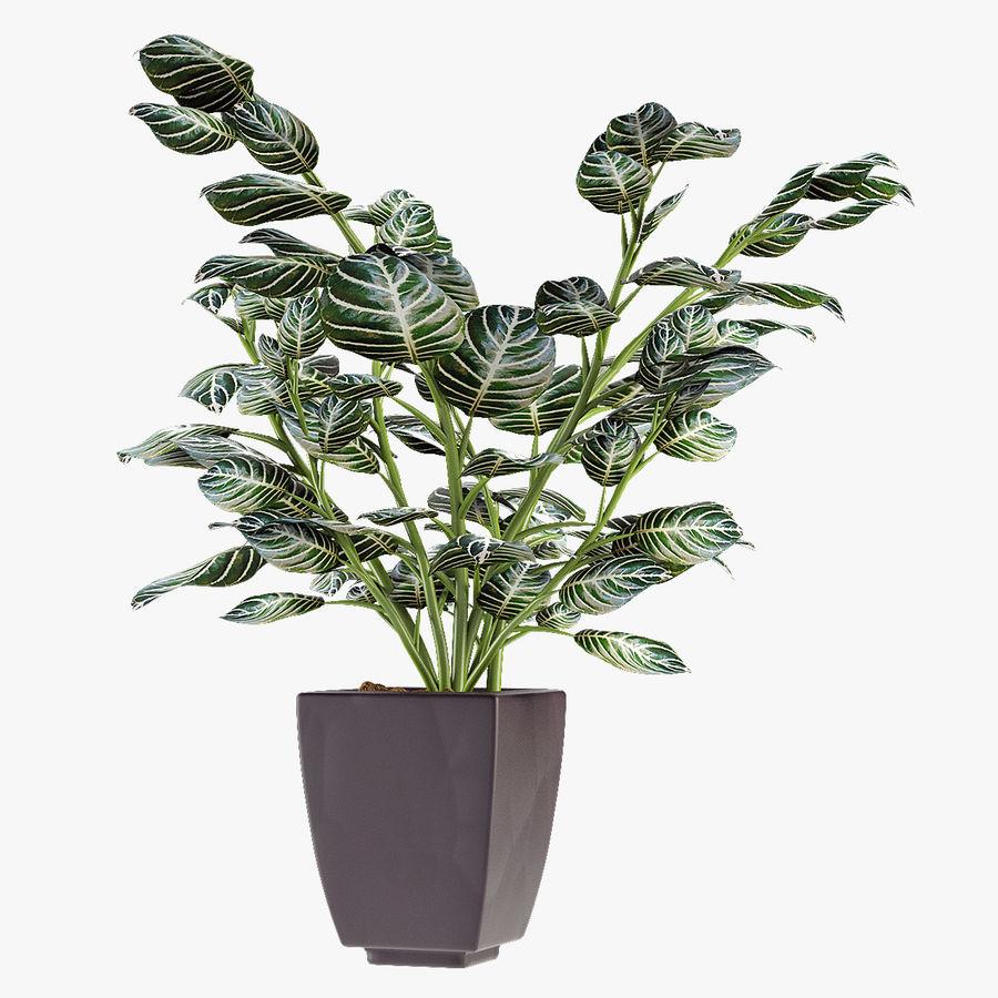 Kolekcje Rośliny 08 royalty-free 3d model - Preview no. 3