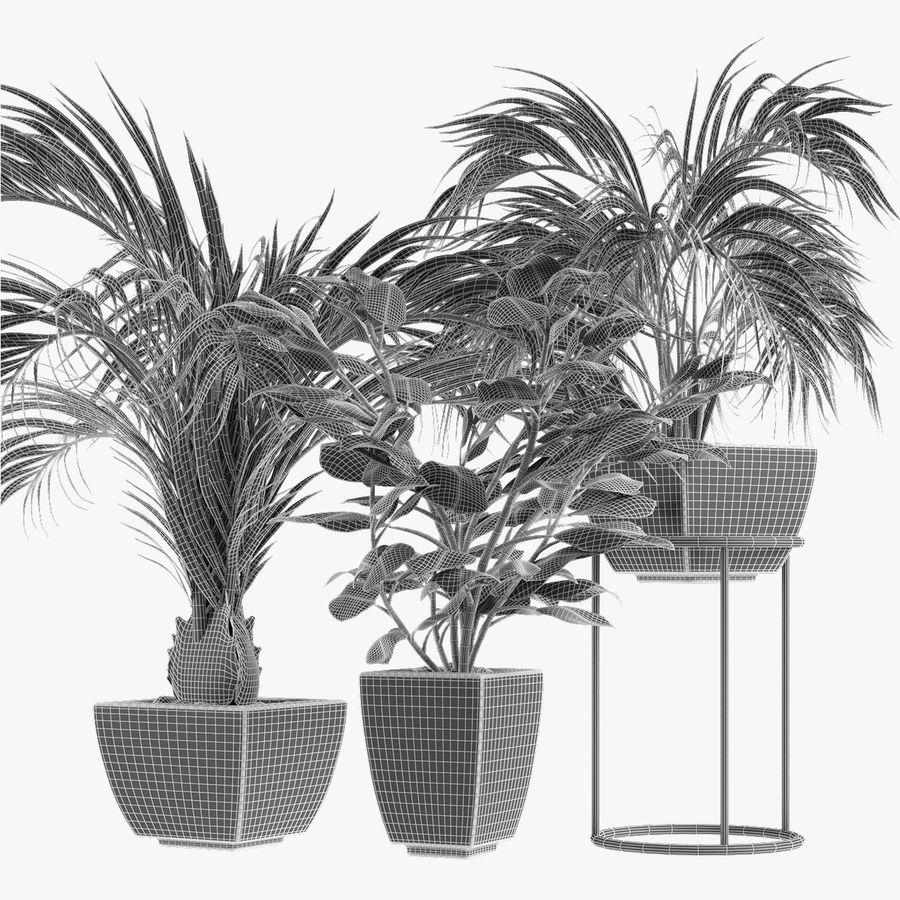 Kolekcje Rośliny 08 royalty-free 3d model - Preview no. 5