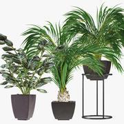 Kolekcje Rośliny 08 3d model