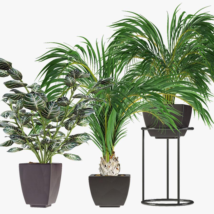 Kolekcje Rośliny 08 royalty-free 3d model - Preview no. 1