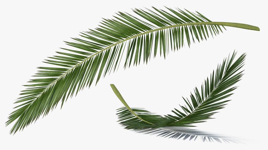 Palm Branch royalty-free 3d model - Preview no. 3