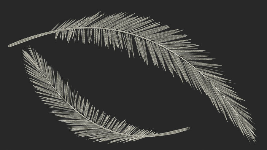 Palm Branch royalty-free 3d model - Preview no. 16