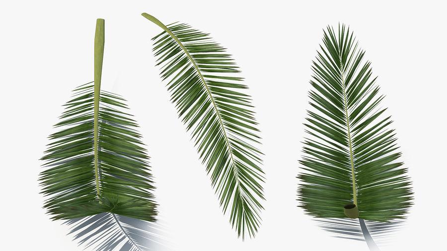 Palm Branch royalty-free 3d model - Preview no. 7