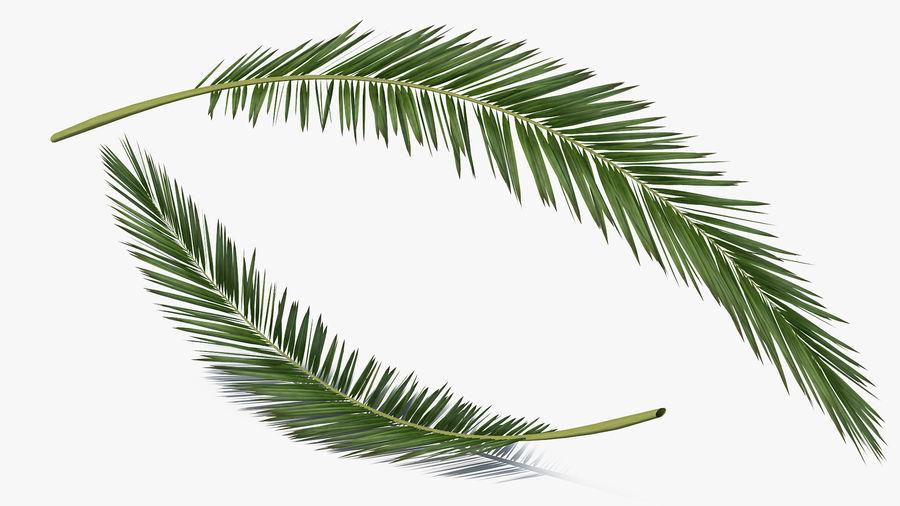 Palm Branch royalty-free 3d model - Preview no. 4