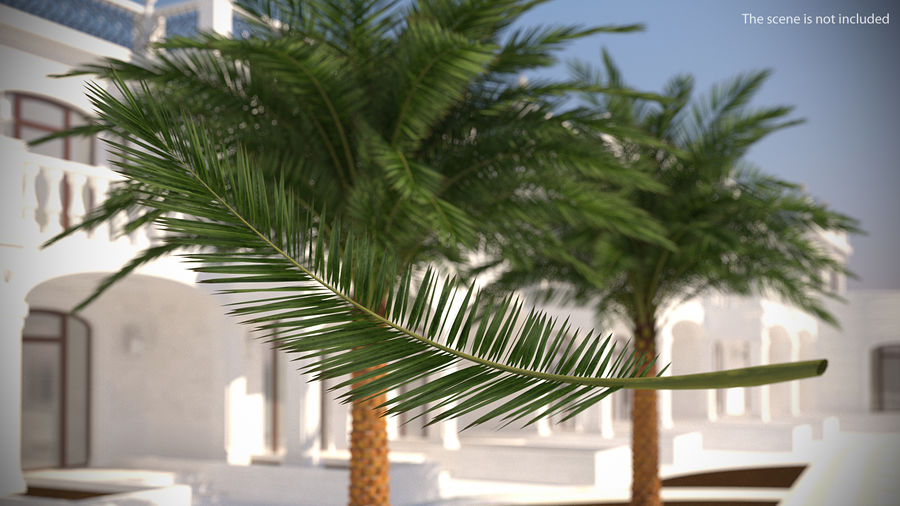 Palm Branch royalty-free 3d model - Preview no. 2