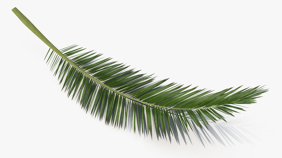 Palm Branch royalty-free 3d model - Preview no. 5