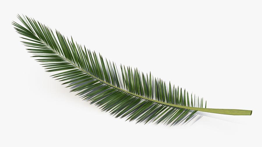 Palm Branch royalty-free 3d model - Preview no. 6